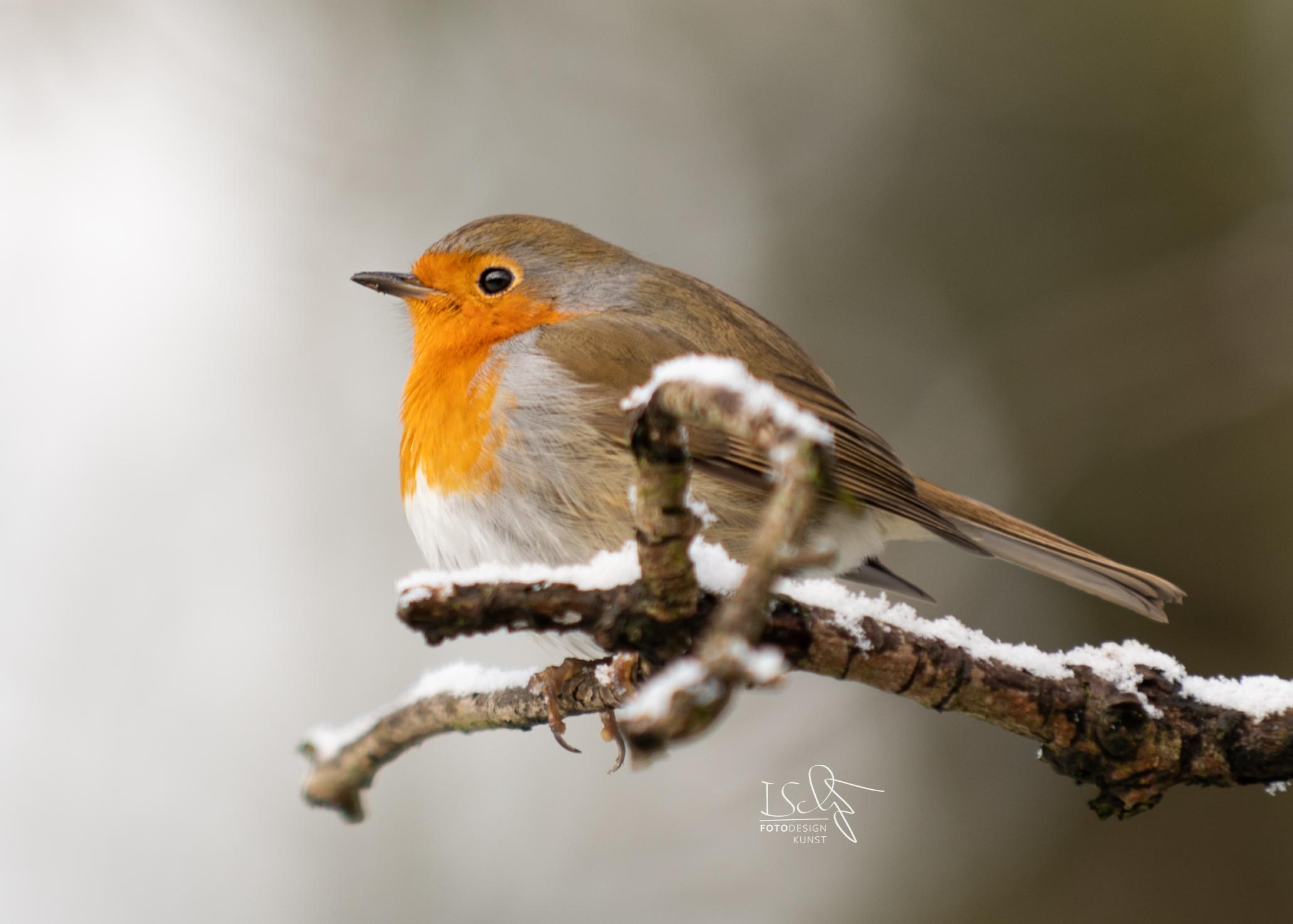 Vogelfotografie im Dortmunder Rombergpark