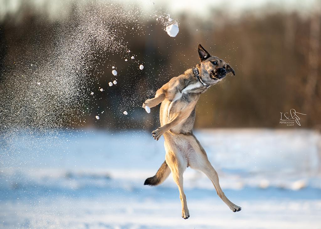 Hundefotografie im Schnee