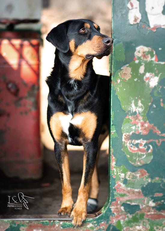 Hund Industriekulisse
