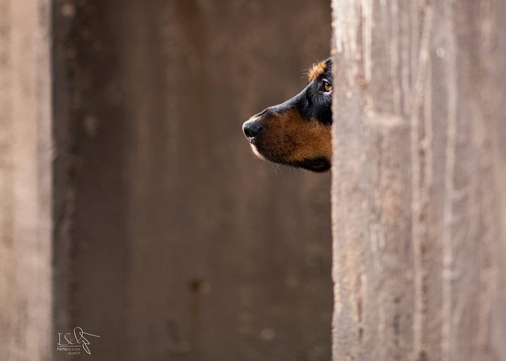 Hundefotografie in Industriekulisse