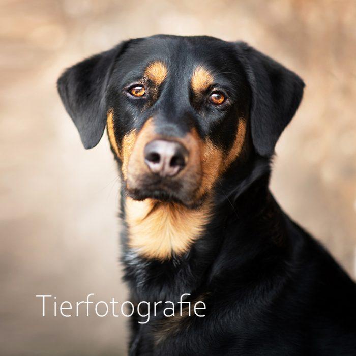 Fotografin-Dortmund Tierfotografie