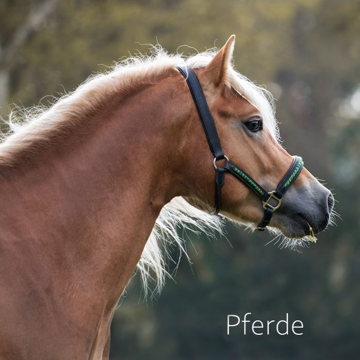 Isabelle Schläger Fotografin Dortmund Pferd