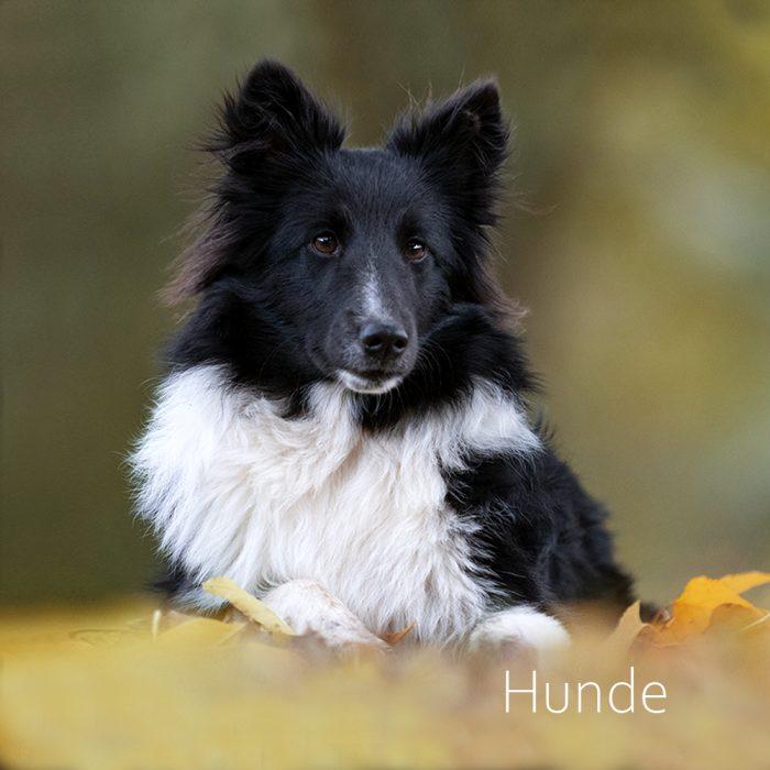 Isabelle Schläger Fotografin Dortmund Hund